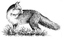 Character: Fox (Generic)