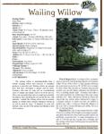 RPG Item: Wailing Willow