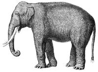 Character: Elephant / Mammoth (Generic)