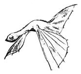 Character: Dracolyth