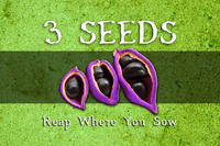 Board Game: 3 Seeds: Reap Where You Sow