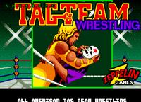 Video Game: American Tag Team Wrestling