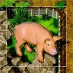 Board Game: Zooloretto: Glücksschwein