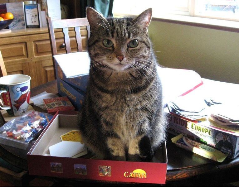 CAT-an!