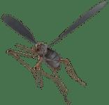 Character: Bloodbug