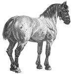 Character: Horse (Generic)