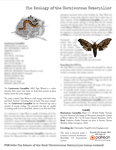 RPG Item: The Ecology of the Carnivorous Caterpillar