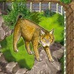 Board Game: Zooloretto: Iberian Lynx