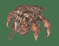 Character: Hermit Crab