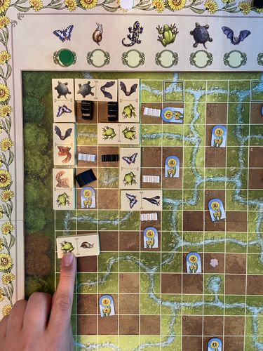 Board Game: Renature