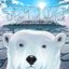 Board Game: Thin Ice: Survival has never been so much fun