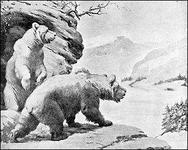 Character: Bear (Generic)
