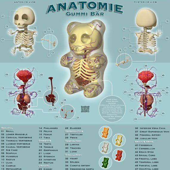 The anatomy of a Gummi Bear | BoardGameGeek | BoardGameGeek