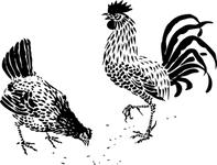 Character: Chicken (Generic)