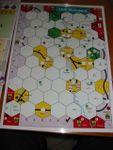 Board Game: 1838: Rheinland