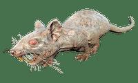 Character: Rad-rat