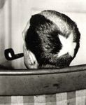 From gallery of duchamp