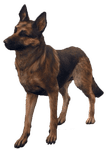 Character: Dogmeat