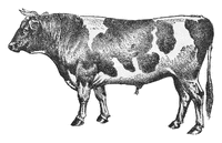 Character: Bovine (Generic)