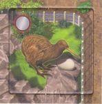 Board Game: Zooloretto: Kiwi