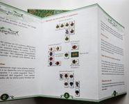 Board Game: Arboretum