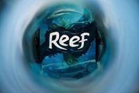 Board Game: Reef