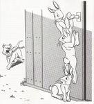 Family: Bunnies & Burrows